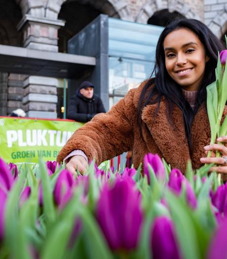 Zevenduizend tulpenfans leven zich uit in pluktuin op Koningin Astridplein