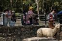 China laat de teugels los. De dierentuin van Sjanghai trekt weer volop bezoekers en ook die van Peking gaat dit weekeinde weer open. In Wuhan, de brandhaard van het coronavirus, komt het openbare leven ook weer op gang.