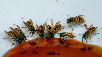SOS zomerinsecten: brengen ze virussen over en hoe voorkom je muggen-, wespen- en dazensteken?