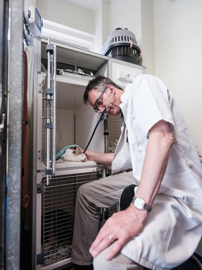 Dierenarts Andre Bruns behandelt een vergiftigde kat, die aan infuus ligt.