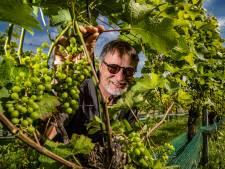 Wat de wijnboeren willen op de Veluwe? Wind om de druiven te drogen: 'Dit is extreem'
