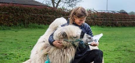 Fulltime avonturier Tamar (34) trekt samen met kameel Einstein door ons land: 'Wij zijn ook gastvrij'