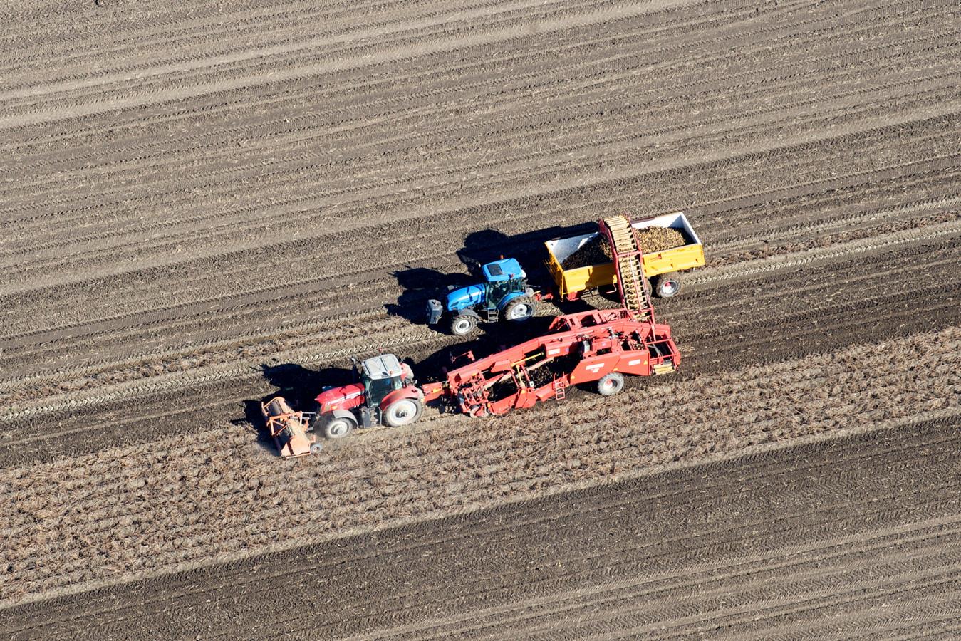Boeren bezig met het binnenhalen van hun aardappeloogst.