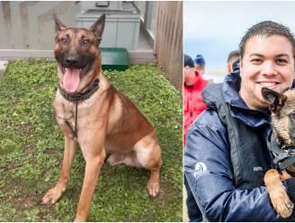 """""""Toen Sam stierf, is er ook een stukje van mezelf gestorven"""": inspecteur Thomas (29) getuigt over verlies van dierbare politiehond na aanrijding met vluchtmisdrijf"""
