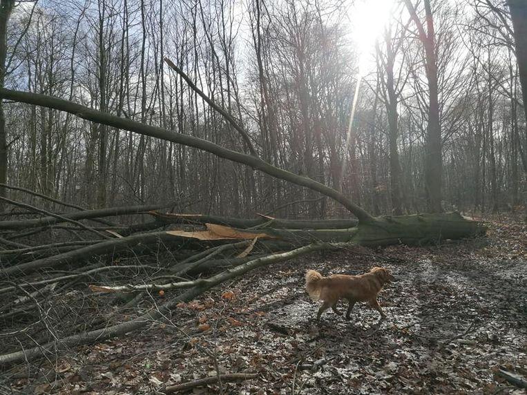 Het bos in Linden na doortocht Ciara