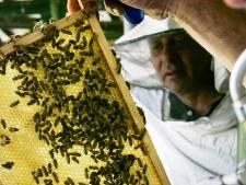Veel belangstelling voor jaarlijkse bijentelling