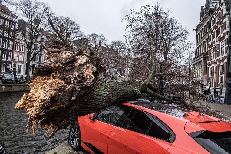 In Amsterdam is een boom op geparkeerde auto's gevallen. Beeld Joris van Gennip / ANP