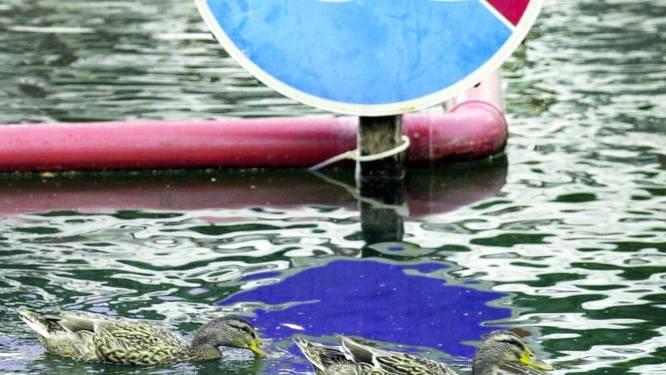 Turtelboom wil zwemverbod voor relschoppers