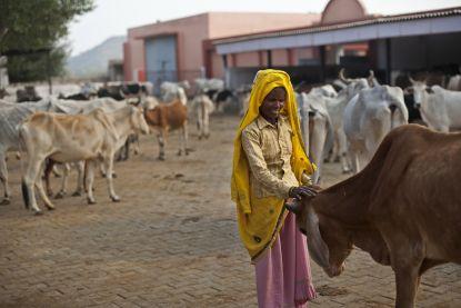 Indiase tiener doodgeslagen omdat hij rundvlees bijhad