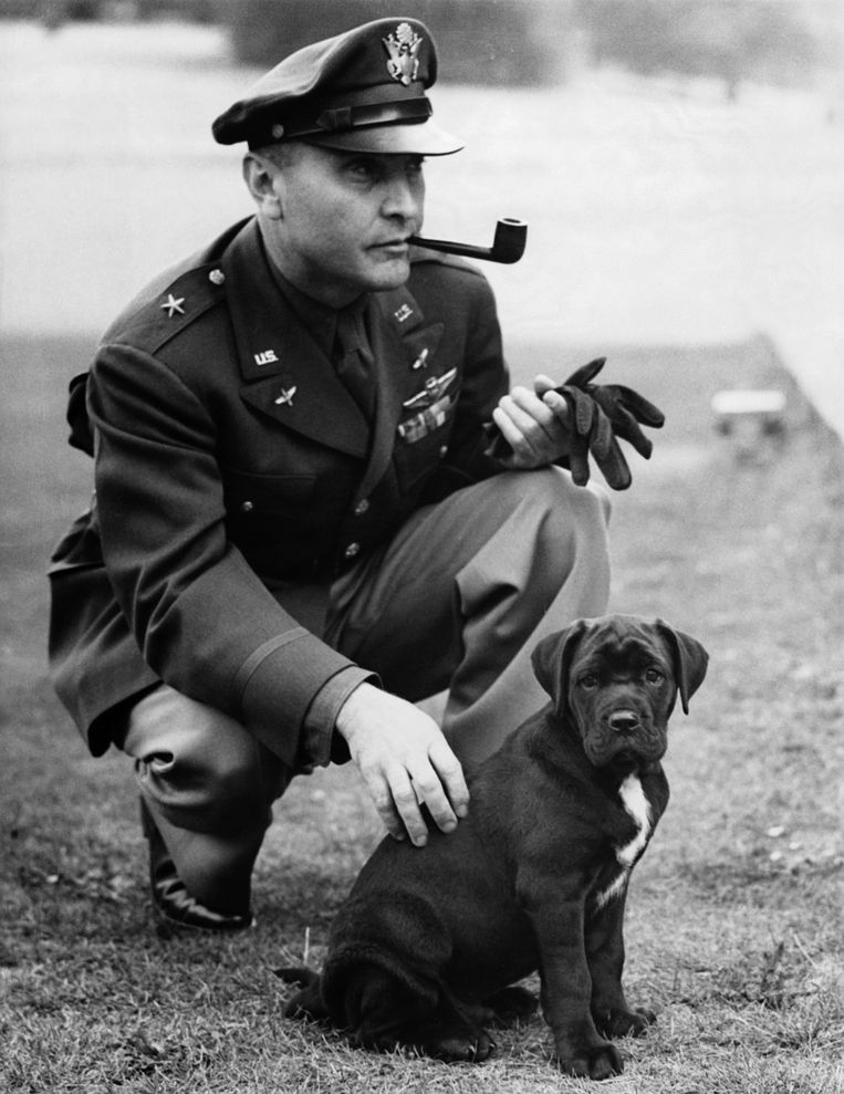Honden speelden een grote rol aan beide kanten tijdens WOII. Beeld Corbis via Getty Images