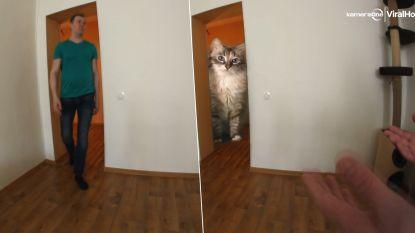 Gigantische kat wandelt kamer binnen