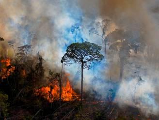 "Nu al recordaantal bosbranden in Amazonewoud: ""Zowel symptoom als oorzaak van klimaatcrisis"""