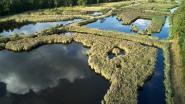"""""""Kleine eilandjes natuur proberen verbinden"""": Nationaal Park Hoge Kempen wordt dubbel zo groot"""