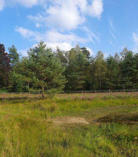 Utrechts Landschap plaatst raster ter bescherming van schapen in Dartheide Leersum