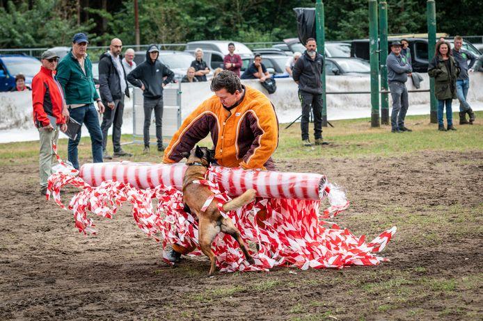 Aan de Rijsvensestraat in Berghem is een kermisterrein opgebouwd, waar wedstrijden met (speur)honden worden gehouden. Zo moeten ze bijvoorbeeld verdachte personen opsporen. Aan het werk is Alin Nechita uit Roemenië met hond Perls of Grant Amir.