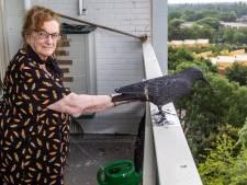 Rie (86) uit Deventer lijkt plots van de duivenoverlast verlost: 'Ze vliegen niet eens meer voorbij'