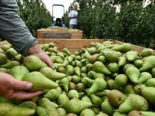 Schade fruittelers door vogels geschat op 100.000 euro