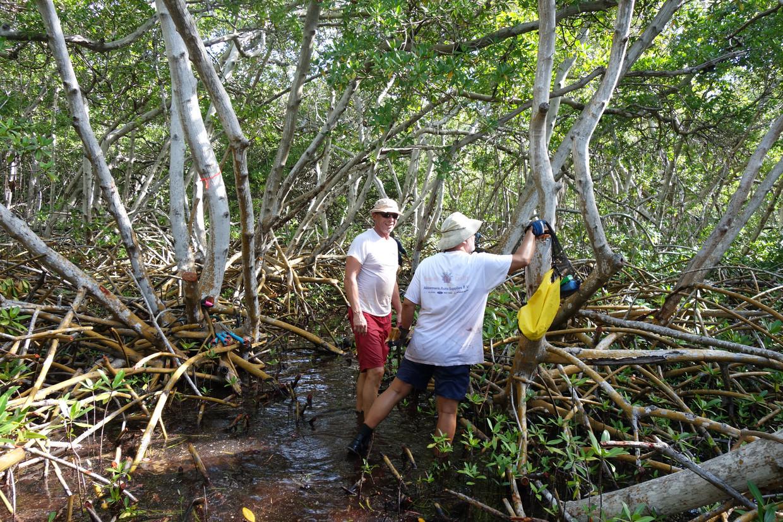 Vrijwilligers kappen mangrove  in Lac, Bonaire.