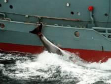 La Norvège reconduit les quotas de chasse à la baleine