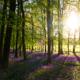 Ongelooflijk maar waar: volgende week laat de lente zich zien