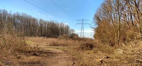 Arendskerke is woest over kap in Poelbos: 'Dit is een kaalslag als nooit tevoren'