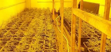 Hennepkwekerij met 1000 planten opgerold in Baak; politie houdt man (50) en vrouw (41) aan