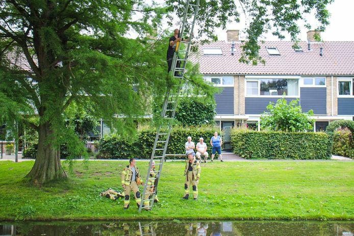 De brandweer plaatst een ladder tegen de boom.