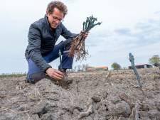 Wijnbouw is een zaak van de lange adem: 'We moeten nog negenduizend steuntjes bij de aanplant zetten'