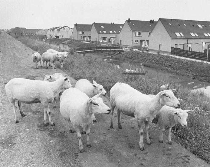 Noordendijk met rechts het Aletta Jacob-erf. Ca 1983.