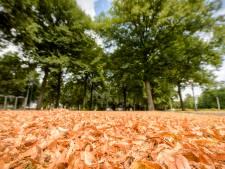 Het is al een beetje herfst, door de hitte en de droogte