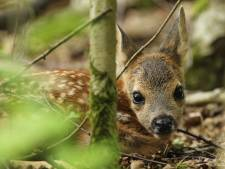 Een jong diertje, helemaal alleen in het bos. Is dat erg?