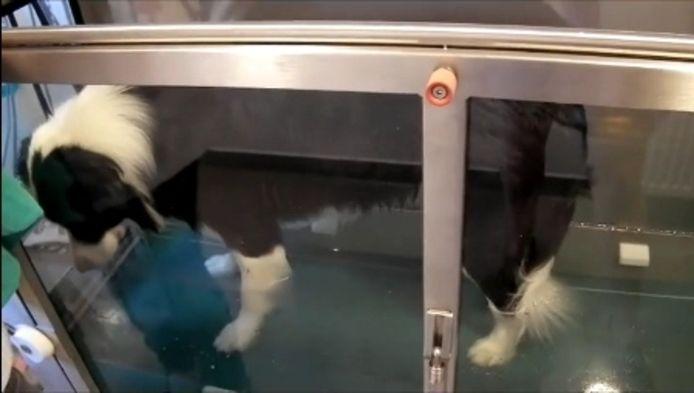 Joker in de aquatrainer. videofragment Karolien Koolhof