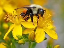 Forse afname aantal insecten in natuurgebieden Duitsland