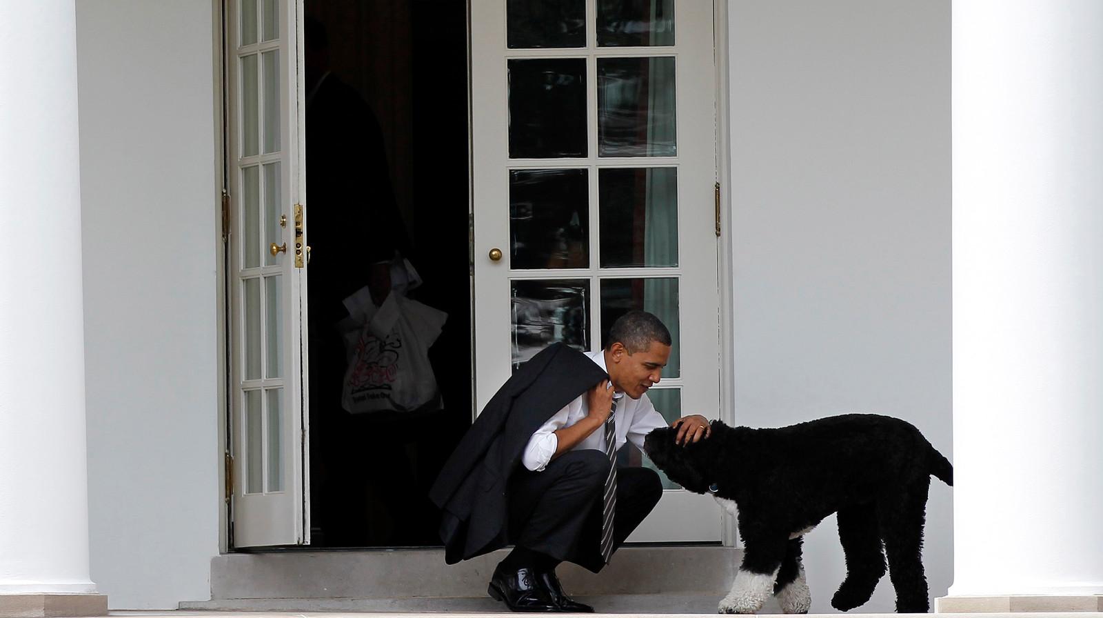 Toenmalig president Barack Obama aait hond Bo in 2012.
