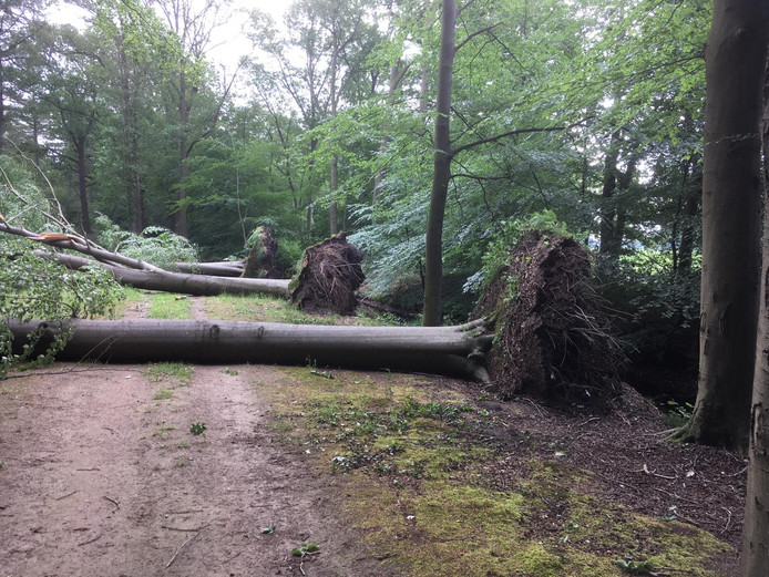 Schade storm in bos Landgoed Dorth bij Harfsen