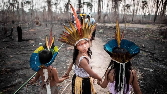 """""""Stukken Amazone-regenwoud illegaal te koop op Facebook"""""""
