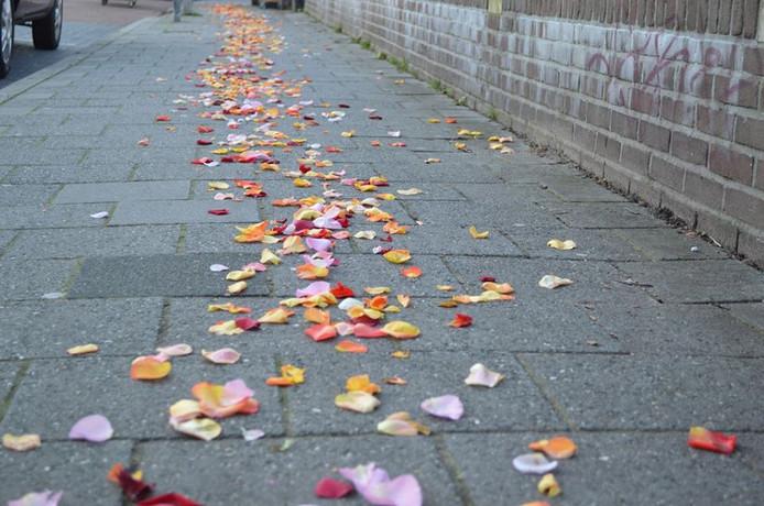 De rozenblaadjes leiden van de Stadkamer naar de bloemenwinkel.