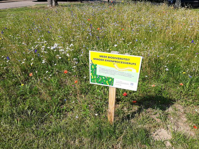 De gemeente Hardenberg streeft naar meer biodiversiteit door het inzaaien van wilde bloemen op grasvelden. Zoals hier aan de Kromme Steeg.