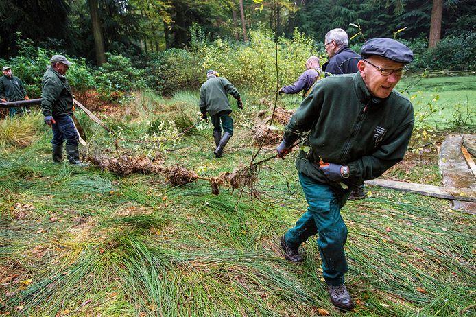 Vrijwilligers helpen mee aan het beheer in bosgebied De Utrecht bij Esbeek.