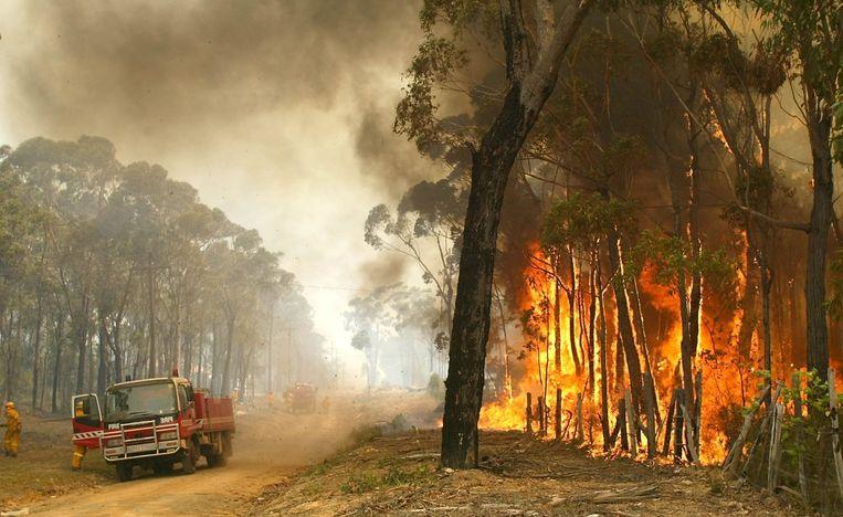 Eerdere jaren begon het bosbrandenseizoen in Australië pas later. Beeld ANP