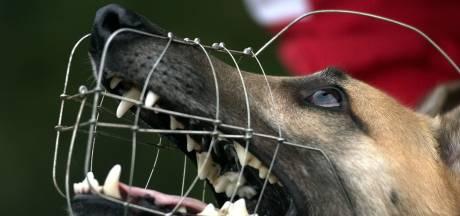 Burgemeester beslist over lot van hond die in Stevensbeek andere hond doodbeet