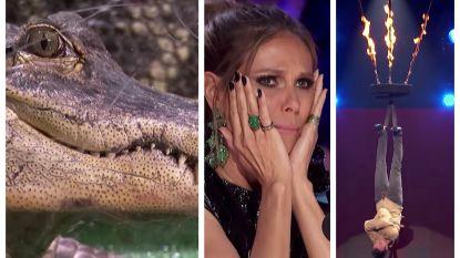 Ontsnappingsartiest bijna verslonden door krokodillen in 'America's Got Talent'