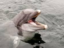 World Animal Protection roept overheid op om Dolfinarium te verbieden om dolfijnen naar China te laten gaan