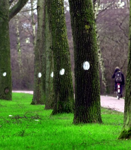 In 2023 pas onderhoud van het Bennekomse bos, maar de voorbereidingen beginnen nu al