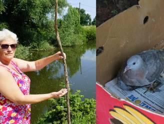 """Bewoners Halve Maan willen dat illegale bevissing stopt: """"Vogels geraken verstrikt in achtergelaten lijnen"""""""