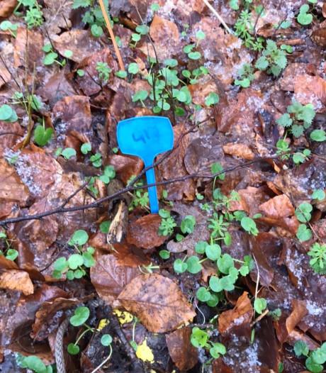 Mysterieuze blauwe bordjes in bos Bilthoven: smurfen, speurtocht of toch iets anders?