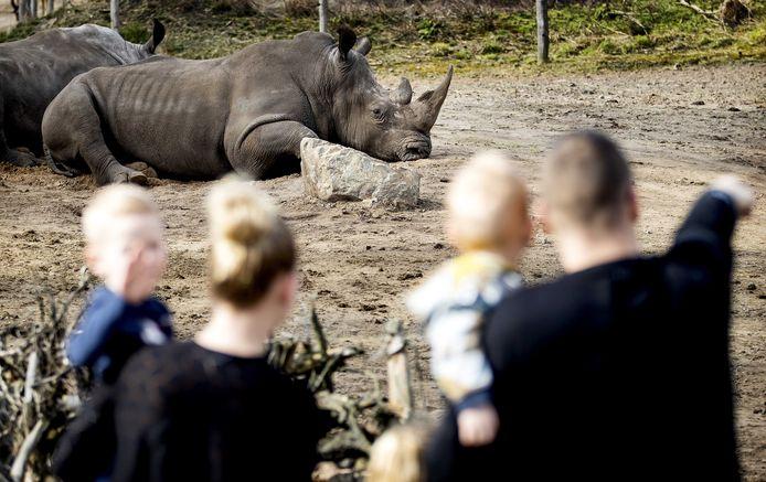 Bezoekers van Safari Resort Beekse Bergen kijken naar de dieren. Het safaripark is vanwege de coronacrisis tijdelijk gesloten.