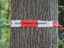 2.300 Roosendaalse eiken worden behandeld tegen de eikenprocessierups