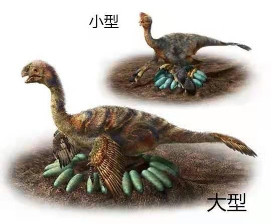 Afbeelding van een broedende oviraptor.