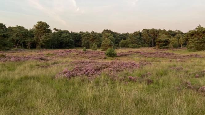 GroenRand razend over nee van gemeenten tegen Grenspark Kalmthoutse Heide als Nationaal Park